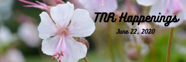 TNR Happenings 6.22